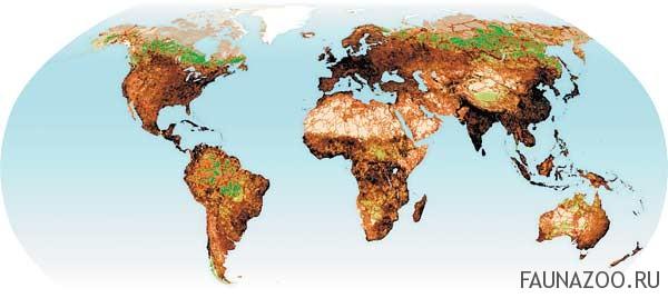 Экосистемы нашей планеты
