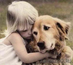 Верные друзья человека - собаки
