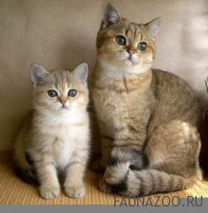 Кошка или кот