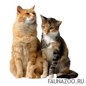 Иерархия кошек