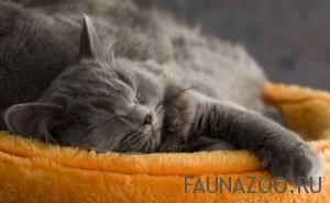 Видят ли домашние животные сны