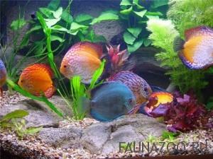 Ухаживаем правильно за аквариумными рыбками