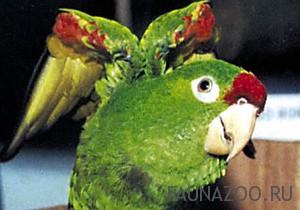 Как правильно лечить попугая