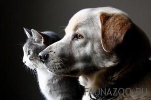 Кастрация и стерилизация домашних животных