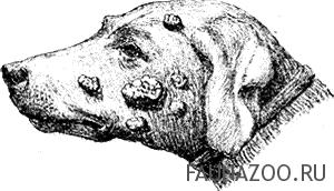 Опухоли и наросты у собак