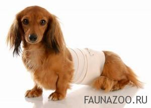 Первая медицинская помощь собаке