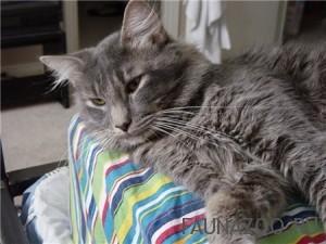 Почему болеют кошки