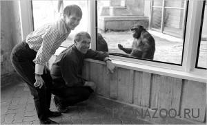 Говорящее шимпанзе Уошо