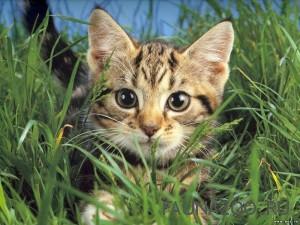 Травка для кошки
