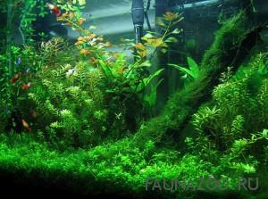 Аквариумная флора