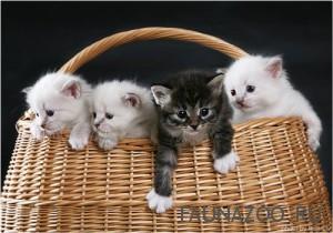 Два основных правила при воспитании кошки
