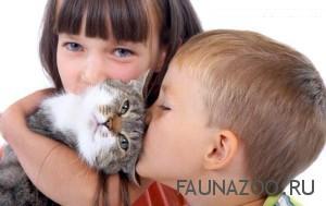 Если у вас аллергия на кошек