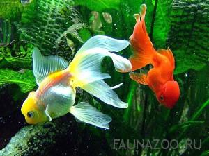 Как выбрать аквариум и как ухаживать за аквариумными рыбками