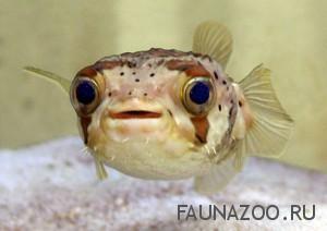 Профилактика заболеваний аквариумных рыбок
