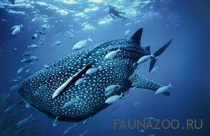 Самая маленькая и самая большая в мире рыба