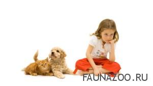Аллергия у домашних животных