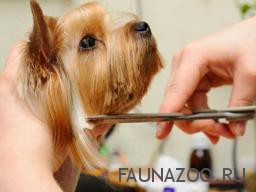 Виды парикмахерского ухода за собаками.