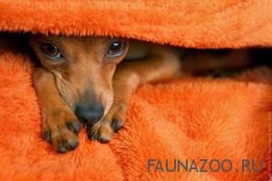 Как защитить щенка от болезней