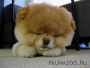 Собака - это не только прекрасно, но и сложно