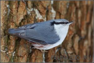 Бегают ли птицы по деревьям