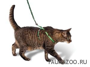 Как правильно выгуливать кошек