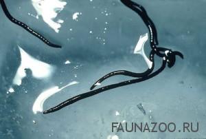 Ледяные черви – они существуют
