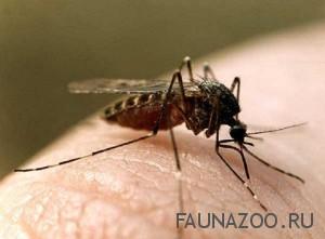 Комары очень боятся 8 ароматов, что это за ароматы
