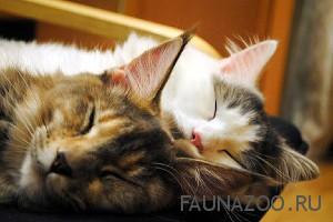 Почему коты много спят