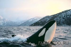 Почему молчат киты