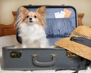 Вывоз животных за границу