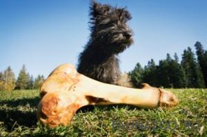 Как отучить собаку подбирать остатки пищи во время прогулок?