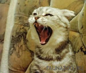 Зубные боли у котов