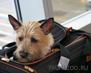 Путешествуем с животными правила проживания в гостинице