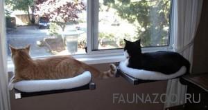 Что может послужить спальным местом для вашего домашнего кота