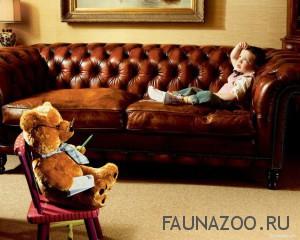 Домашние животные. Учителя или врачи-психологи