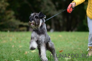 Как выбрать поводок-рулетку для собаки