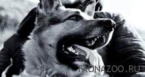 Основы собачьего языка