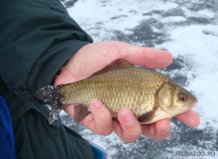 когда лучше клюет рыба зимой