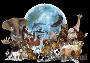 Имеют ли животные права