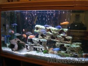 Виды, типы аквариумов для рыбок