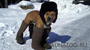 Как продержаться в холода Вашему питомцу