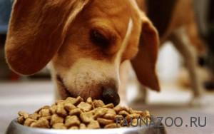 Рацион для щенка – правильный выбор сухих кормов