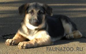 Выбор двухмесячного щенка