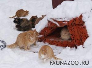 Как помочь домашним животным в зимний период