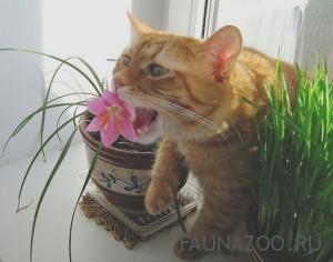 Самые опасные и ядовитые комнатные растения для домашних животных