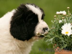 Самые опасные и ядовитые комнатные растения для домашних животных1