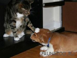 Как подружить между собой кошек и собак