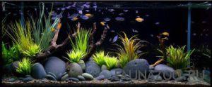 Правила оформления аквариумов