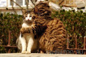 Кошачья психология
