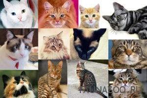 Самые распространенные породы кошек